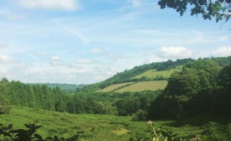 Surrey hills IMG_5717